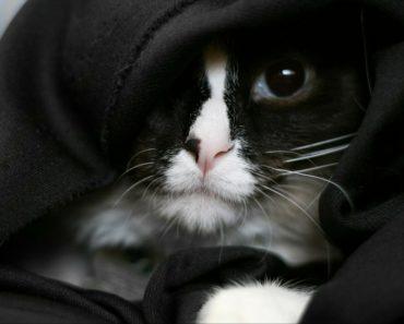 20 Kitten Parodies that are Worth Watching