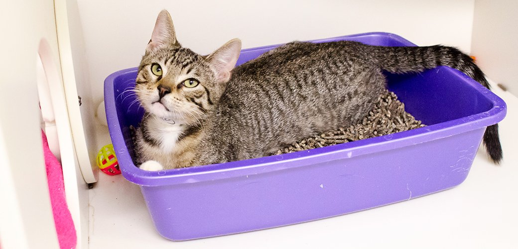 How To Get Cat To Pee In Litter Box