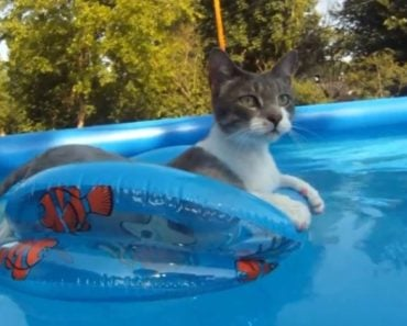 How Do Cats Naturally Cool Themselves Down?