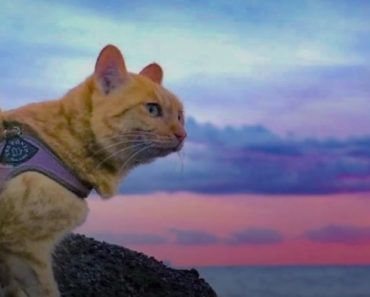 Traveling With Your Cat:  A Quick Guide