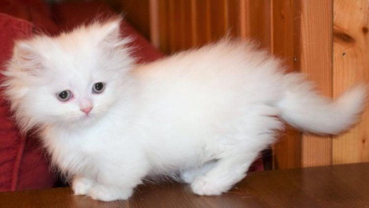 Rug Hugger Kittens Carpet Vidalondon