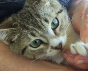 How to and Why You Need to Trim Your Cat's Nails