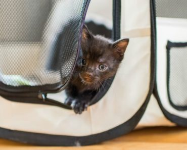 How to Construct the Perfect Playpen for Kittens