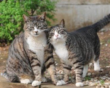 What Characteristics Define a Mackerel Tabby Cat?