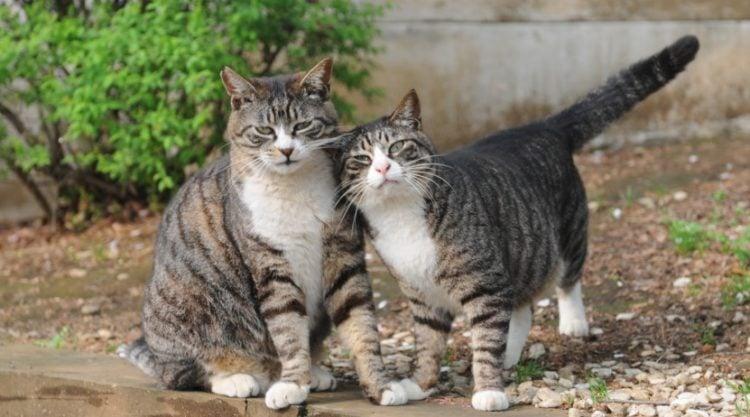 What Characteristics Define A Mackerel Tabby Cat