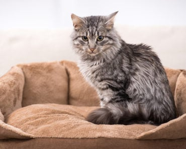 10 Facts You Didn't Know about the Domestic Medium Hair Breed