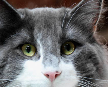 Cat Eye Discharge: When Should You See a Vet?