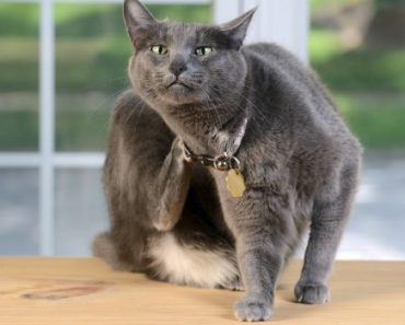 Common Cat Skin Conditions to be Watchful For
