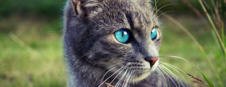 Why are Kittens Born with Blue Eyes?