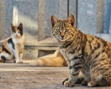 Is It Possible Stray Cats Are Destroying Our Ecosystems?
