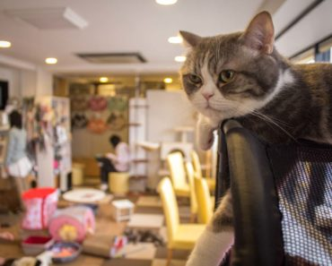 Tucker Carlson Says Cat Cafes are Worse Than White Supremacy