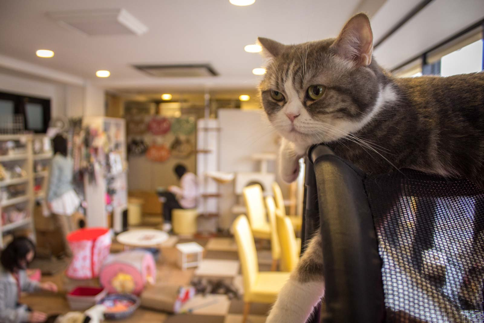 The History And Evolution Of The Cat Cafe