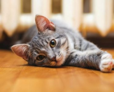 The Stages of a Cat Urinary Blockage