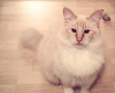 Serial Cat Killer Suspected in a String of Mutilated Animals