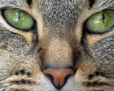 What Does It Mean When Your Cat's Nose Changes Color?