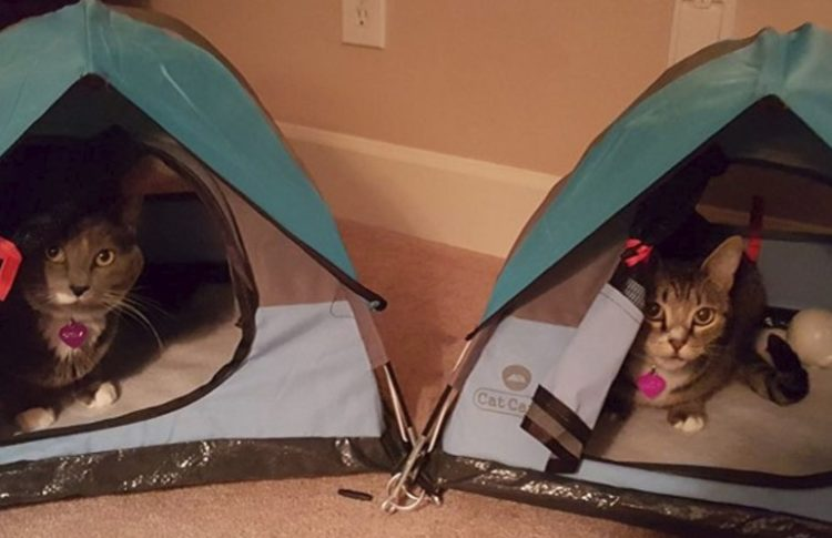 7ff8356977 Cat Sized Camping Tents are Becoming a Thing Now