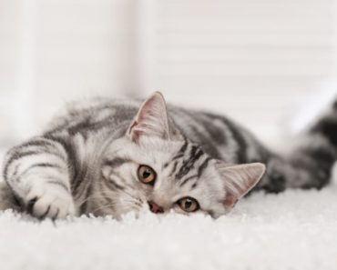Household Chemicals Harming Your Cat's Thyroid