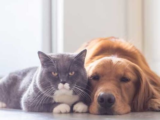 It U0026 39 S Just Now Becoming Illegal To Consume Dogs And Cats In