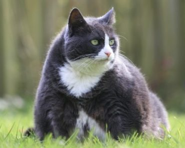 Your Cat's Obesity is More Than Likely Your Fault