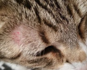 Why Your Cat May be a Ringworm Carrier