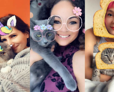 Snapchat Adds Cat Lenses So You Can Put Filters on Your Cat