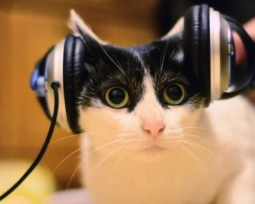 Are Cats Able to Learn Words?