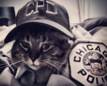 Chicago Police adds Cat Cop to the Beat