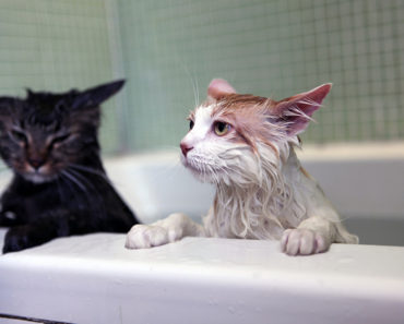 Why You Should Always Bathe Your Cat in the Sink