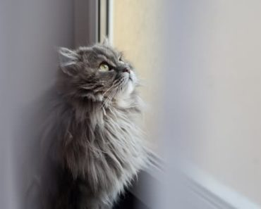 Your Cat Can Get a Sunburn From Lying by a Window