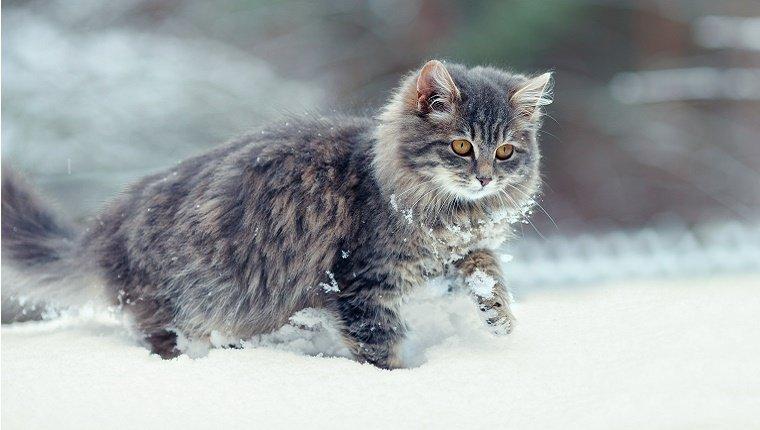 Risultati immagini per winter cat