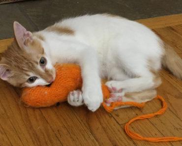 Guy Chooses Carnivorous Cat Over Vegan Girlfriend