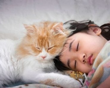 Can You Catch a Cold from Your Cat?