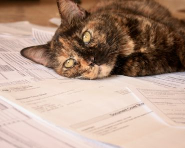 Tax Cat To The Rescue!