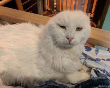 Cat Loses Ears
