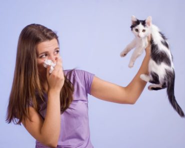 Allergies to Cats