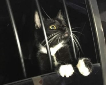 Cat Detained by Police