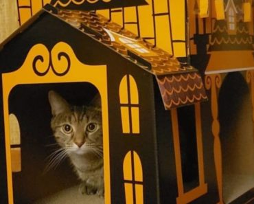 Haunted Cat House