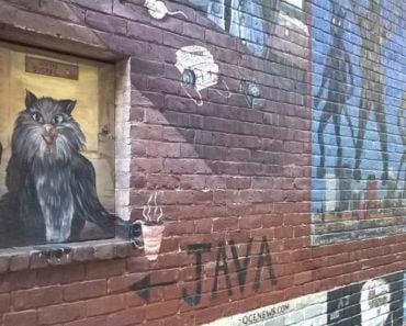 Cat Alley