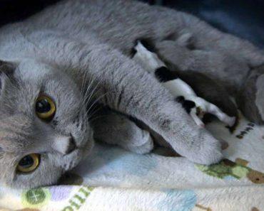 Cat Nursing Pups