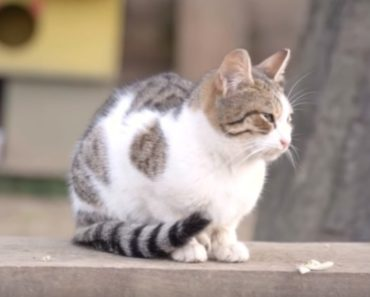 Cat Parks of Istanbul