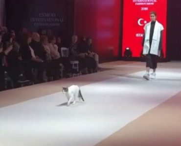 Fashion Show Cat