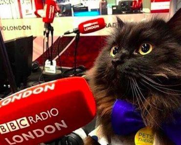 Mr. London Meow