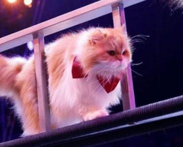 Savitsky Cats