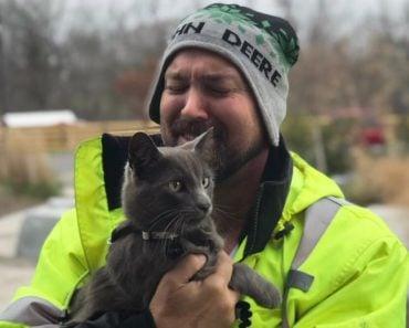 Reunited Cat