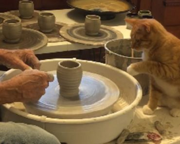 Creative Cat Takes Turn at The Pottery Wheel in Viral Video