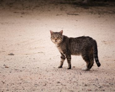 Why a City Would Release 1000 Feral Cats
