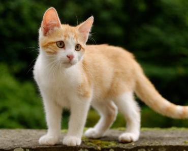 When Do Newborn Kittens Open Their Eyes?