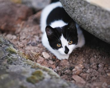 Here are Some Ways to Prevent Your Cat From Killing Wildlife