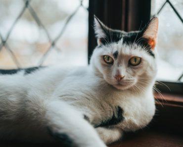 Five Tips To Make Your Indoor Cat Happier