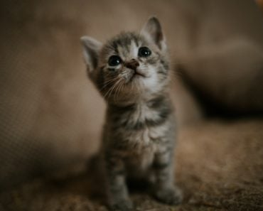 FDA Approves Generic Topical Parasiticide for Cats